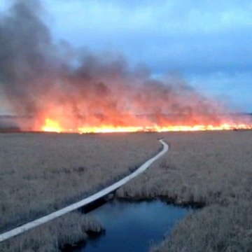 fire in Marsh at Point Pelee National Park Leamington Ont