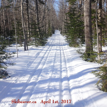 Ski Beaver - best spring skiing in a very long time