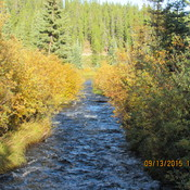 This is a fall time shot of McIntyre Creek from the bridge on 'My Urban Trail'
