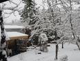 Fresh Snow  - Fredericton, NB