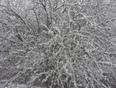 wonderful Spring Wonderland - Oromocto, NB