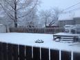 Woke up to this - Dauphin, MB | R7N 0Y3