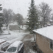 Snow in Winnipeg