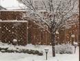 Winter's back ! - Winnipeg, MB, CA