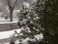 April's SNOW-GLOBE  - Winnipeg, MB, CA