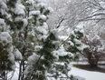 April snow in the Peg - Winnipeg, MB