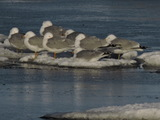Group Huddle - Birchy Bay, NL