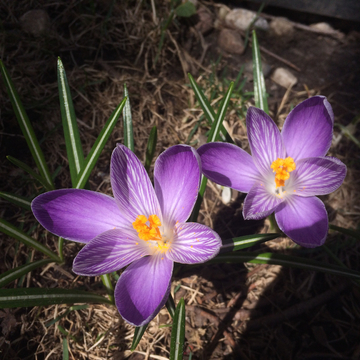 Signs of spring in Ottawa