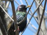 Birds in Mating Mode - Ottawa, ON