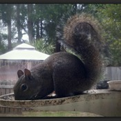 Squirrel in View!