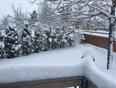 Springtime in Alberta! - Didsbury, AB, CA