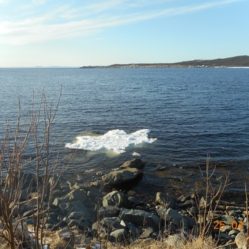 Pack Ice..In The Cove