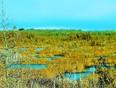 Beauty and the bog. - Kawartha Lakes, ON