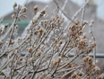 Scenes from Thunder Bay's Ice Storm - Thunder Bay, ON