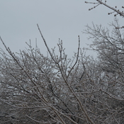 Scenes from Thunder Bay's Ice Storm