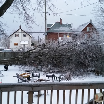 Ice Storm Takes Down Tree