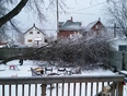 Ice Storm Takes Down Tree  - Thunder Bay, ON