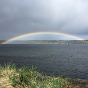 Campbell River Rainbow