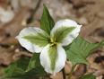 Spring is here. - 7512-8118 Springwater Rd, Aylmer, ON N5H 2R4,