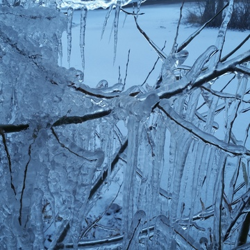 icicle tree how beautiful