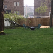 Downed tree takes out shed