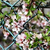 Spring Fenced In/Monkeying around