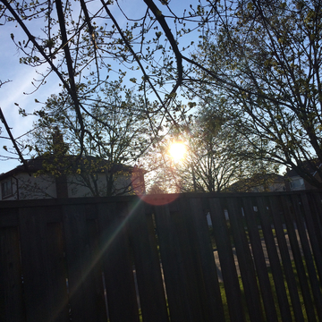 The sun shining through some trees
