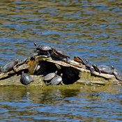 Sunbathing at the Rouge River National Urban Park