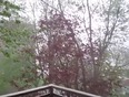 its pouring... - Cobourg, ON