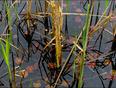 The pond, Elliot Lake. - Elliot Lake, ON