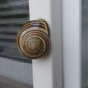 snail on window