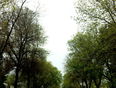 Big trees enjoy the season - Winnipeg, MB, CA