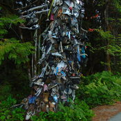 The shoe tree, Great central lake Vancouver Island.