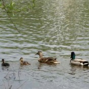 "Dad and Mom chilling out with their babies ""Speed River-Guelph, on"
