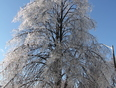 HOLY ice storms, Folks! - Ajax, ON,