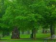 Beauty Rain And Truth - Simcoe, ON
