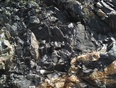 burks falls - Burks Falls, ON