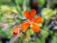 Various Flower Photos - Scar.ON