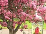 Blooming - Oromocto, NB