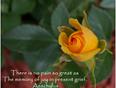 Memory Rose