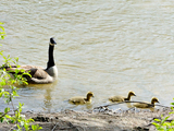 Gibbons Park babies - London, ON