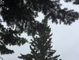Very strong wind and rain in Calgary - Calgary, AB