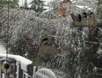 Heavy, wet snow - Keith, AB, CA