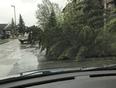 Fallen tree - Edmonton, AB, CA