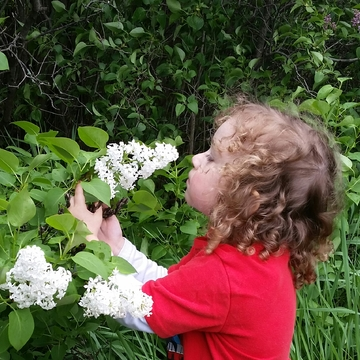 Smelling some beautiful lilacs.
