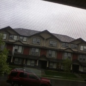 lol look at the sky its gray and a tree is about to fall over