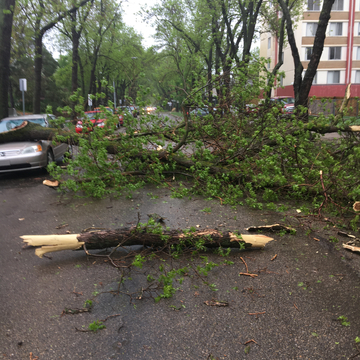 Trees Down in Edmonton