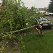 Wind storm in Airdrie