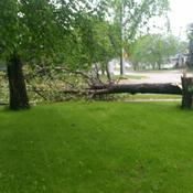 Lacombe Windstorm