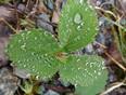 Raindrops - Upper Tantallon, NS